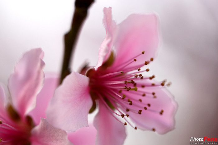 晨拍春花(二)------世纪公园老克指导拍花