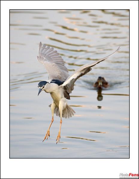 北京将府公园拍鸟