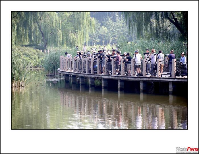 50-500将府公园拍夜鹭