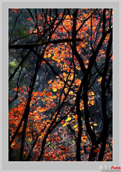 天桂山红叶