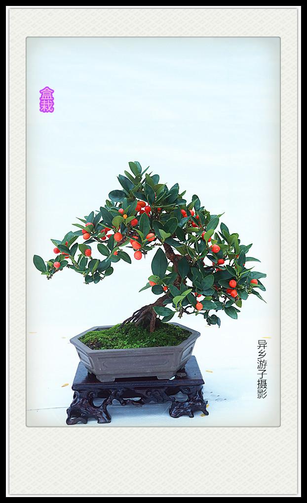 2017香港花卉展____盆栽、盆景<五>原创