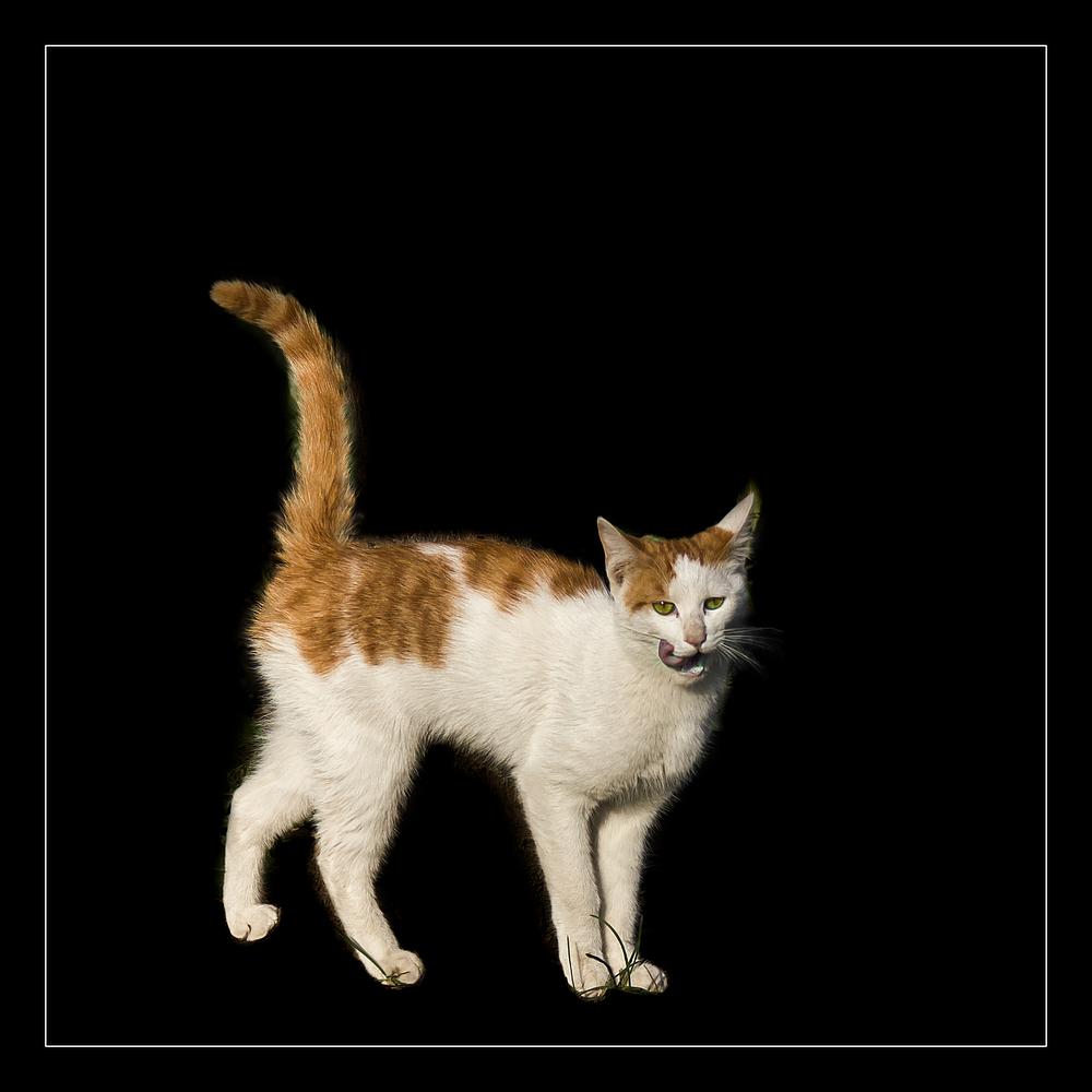 一只嘴馋了的猫