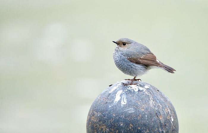 周末快乐————我是一只小小鸟