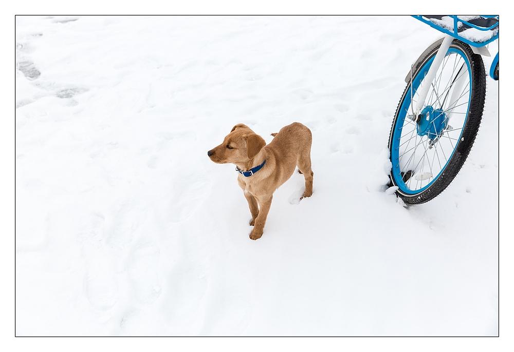 雪地里的狗狗