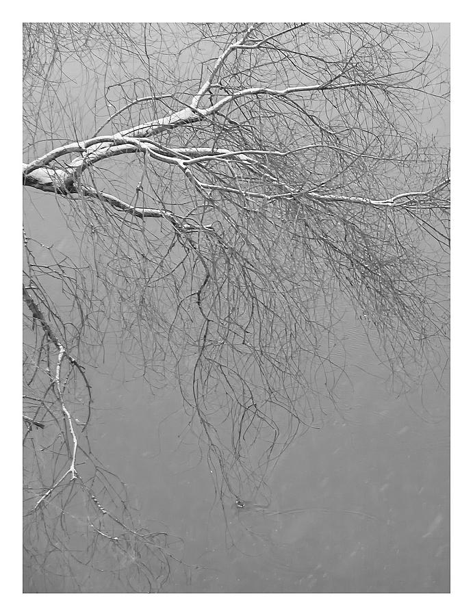 河面上的水鸭娃儿