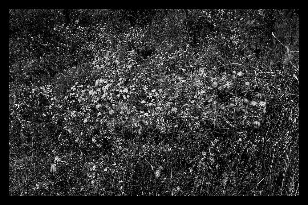 舞动风中的野花