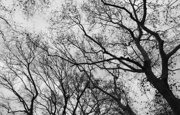 GR DIGITAL————冬天的树
