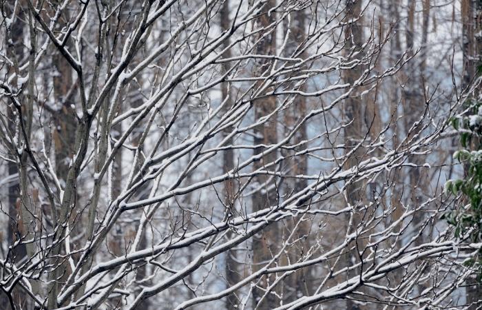 TAMRON 150-600————瑞雪兆丰年