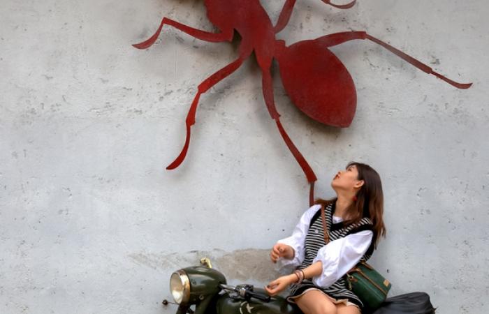 墙上有只红蚂蚁