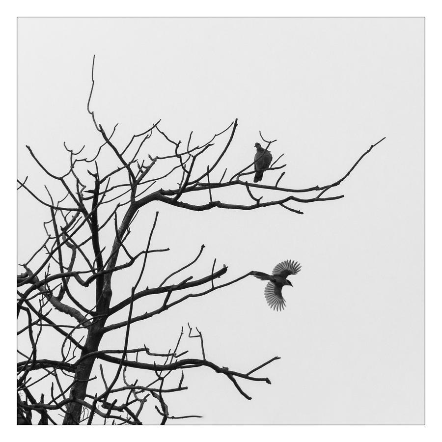 枯树上有两只鸟