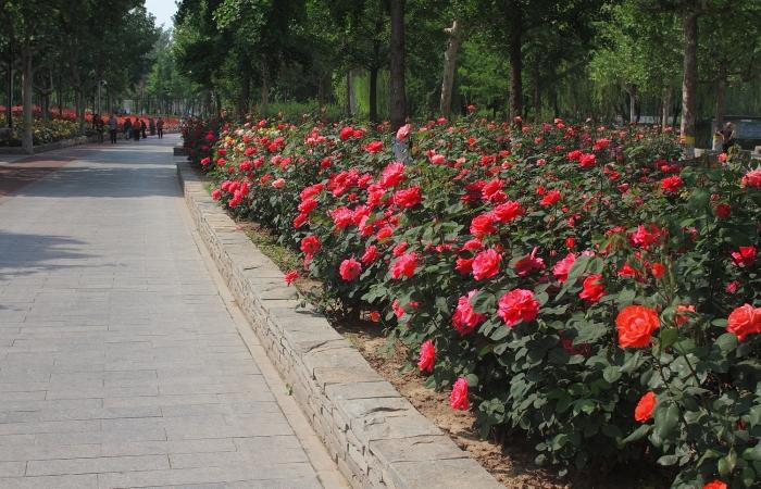 初夏·东环公园