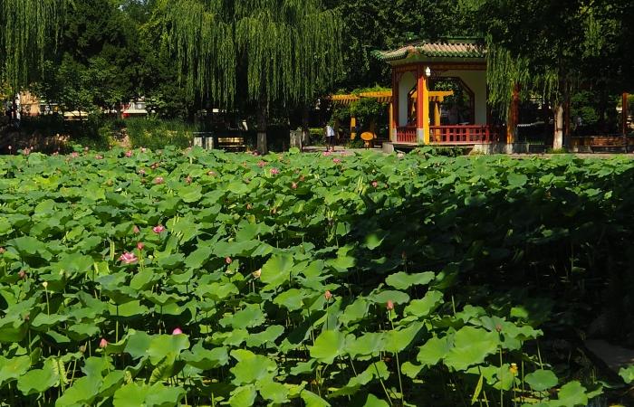 夏日·平安公园