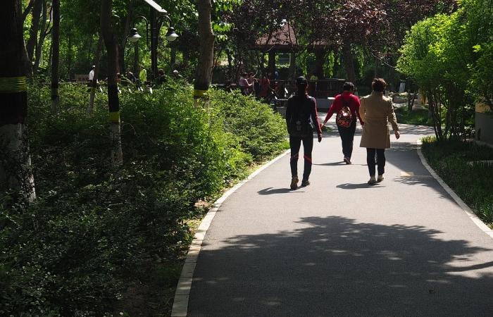 初夏·公园随拍
