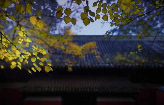 大觉寺的秋