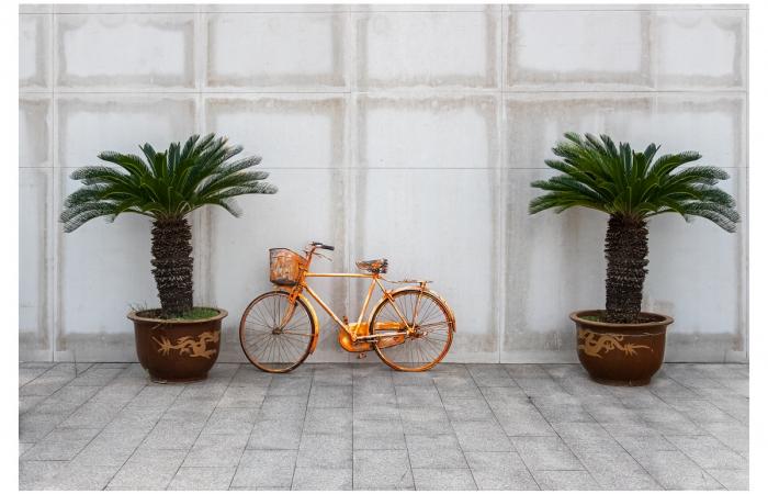 一辆红色自行车和两棵铁树