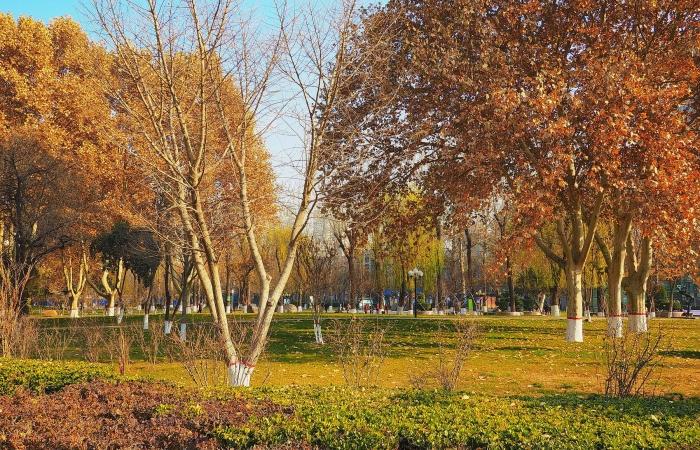 冬日·长安公园