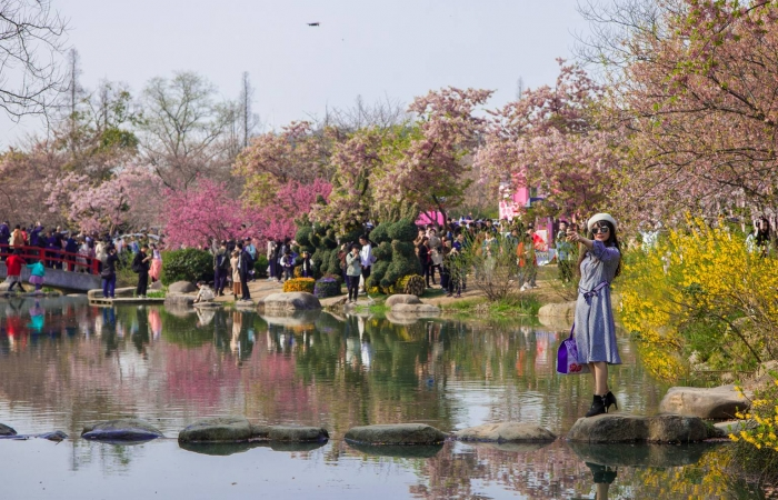 美丽中国行系列(九十三)——无锡樱花谷