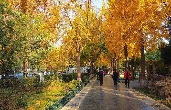 深秋·平安公园
