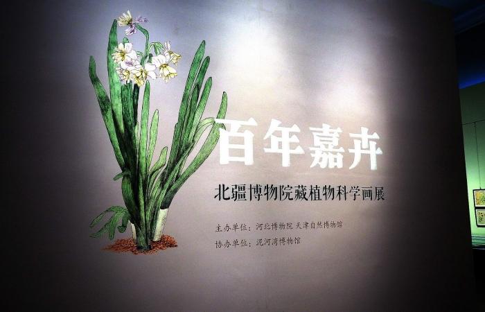《百年嘉卉—北疆博物院藏植物科学画展》