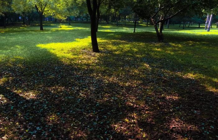 初秋·绿洲公园