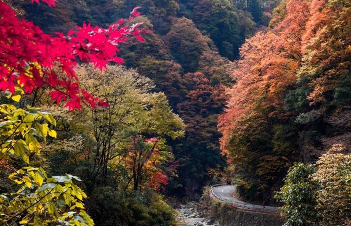 光雾山红叶