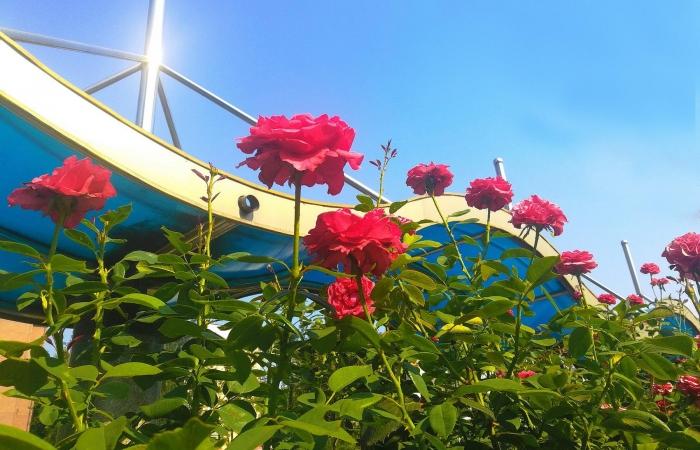 手机随拍·夏日花卉园