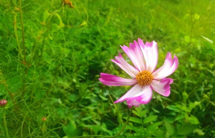 夏天的花儿……(手机随拍)