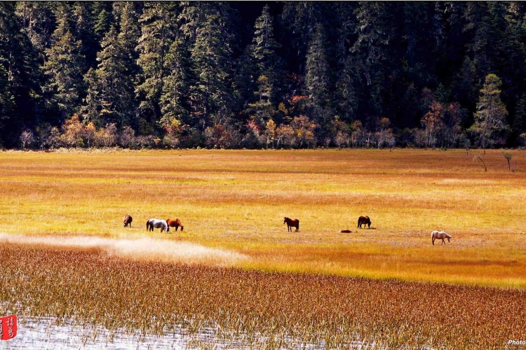 仙境归来梦境回---普达措国家公园