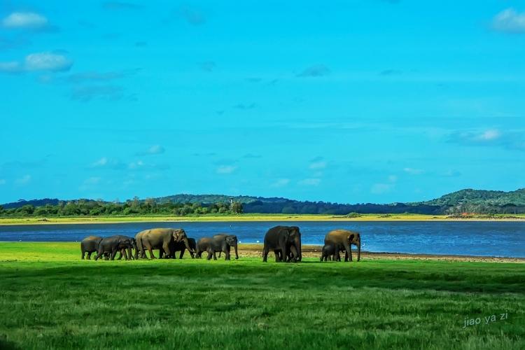 游摄斯里兰卡(14):西格利亚米内瑞亚国家公园(9)